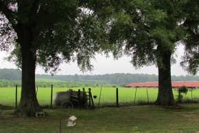 "The greener pastures of my grandparents' backyard represents one of the many ""homes"" we would visit every summer."